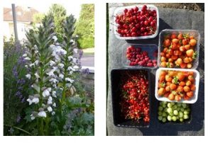 Flowers and fruit punnets